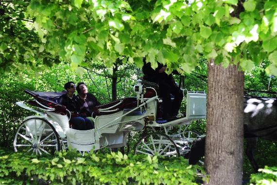 Dorożka w ogrodach Schönbrunn