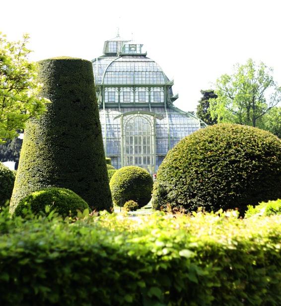 Palmiarnia w ogrodach Schönbrunn