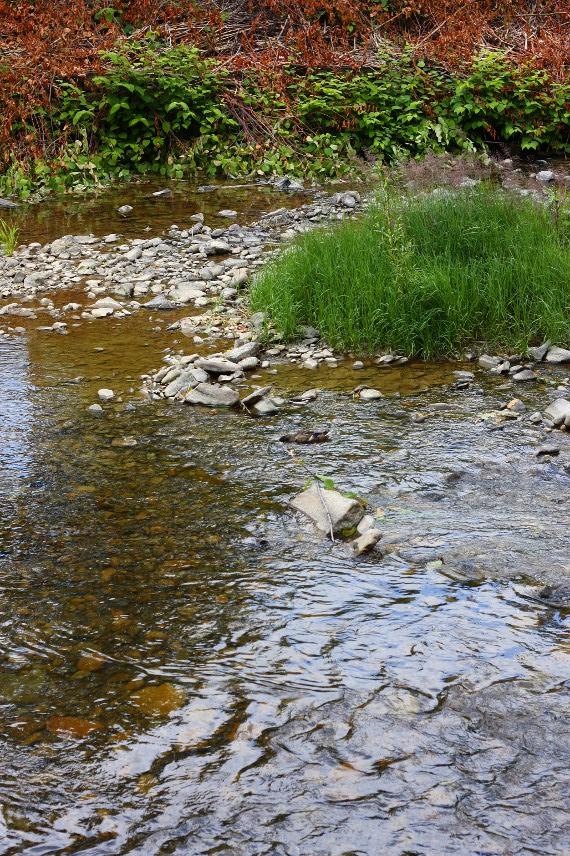 Płytki fragment rzeki Wisły