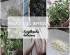 encyklopedia kulinarna